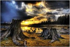 The Beauty of Destruction (Extra Medium) Tags: seattle sunset lake washington bravo scenery tacoma mtrainier pinetrees hdr stumps refelction clearcut clearcutting alderlake 9shots