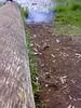 Wood Grass and Muddy Waters! (Doctor Pranthan) Tags: wood fallentree munnar kundaladam