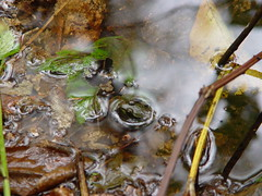Frog (ben salthouse) Tags: frog thelongtrail