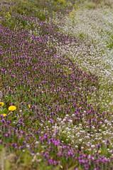 道端にも花の絨毯
