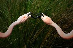 Flamingo Fight (Nikki OK) Tags: pink two bird animal flamingo fighting