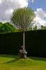 Still (c.c.f.o) Tags: trees sculpture bronze yorkshire sittin ysp yorkshiresculpturepark plensa jaume