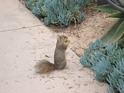 Nut-nibbling squirrel