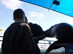 IMGP1012 (bluecav) Tags: big harbour bannana coffs