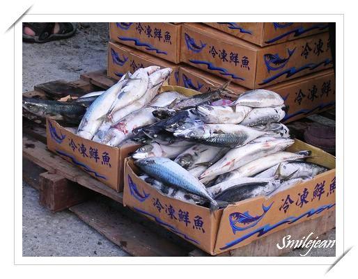 鯖魚節13