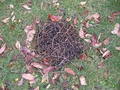 fallen nest?