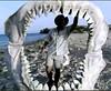 22 megalodon jaws