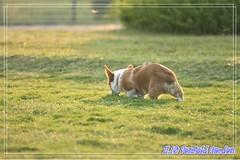 2007.11.10 - Penford Garden 49 (janielam) Tags: garden penfold 20071110