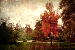 autumn harmony (DocTony Photography) Tags: park autumn paris france tree fall texture leaves photoshop canon garden bench season bravo scenery view searchthebest 5d layers 24105f4l artlibre aplusphoto doctony