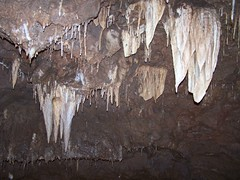 Meramec Caverns - Stanton, Mo (Adventurer Dustin Holmes) Tags: show tour mo formation caves commercial missouri cave caving ozarks stalactite stalactites formations stanton spelunking cccp merameccaverns merameccavern lajollanaturalpark lajollapark