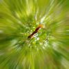 red tail squirrel (AraiGodai) Tags: foglie interesting jump forrest explore rami velocità scoiattolo araigordai redtailsquirrel raigordai araigodai