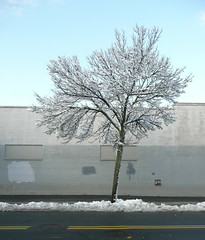 a tree grows in dorchester (marilyn blanche) Tags: winter snow tree dorchesterma thattree
