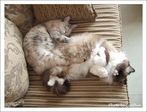 胖Sora和胖Mo一起睡