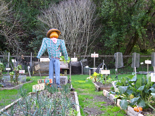 Scarecrow tends his crops