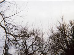 Ansco 50012 (iamzip) Tags: trees winter film lomo keychain 110 ansco50