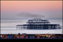 Starlings over Brighton Pier & West Pier (BoblyP) Tags: uk sunset england panorama birds pier seaside nikon brighton unitedkingdom flock betty d200 seafront eastsussex starlings palacepier photooftheday 10faves flickrsbest 25faves mywinners anawesomeshot nikkor70300mmvr betterthangood boblyp brightonhoverocktherealphotographicdeal