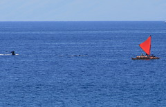 More whale watching on the Hina