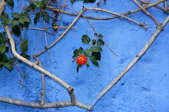 blue II (io747) Tags: travel blue red colour peru reise allyouneedislove freeshot amomentarylapseofreason photosandcalendar exemplaryshots zenenlightment paololivornosfriends hopeinthisworld