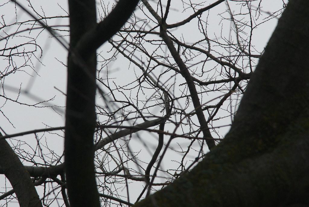2017-02-17 Twigs Test - Take 6 [#3]