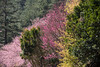 彩色武陵 (Hamster620) Tags: 台灣 taiwan 武陵農場 wulingfarm 樹 tree 植物 plant 花 flower