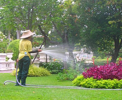 Thailand watering flowers by Danalynn C