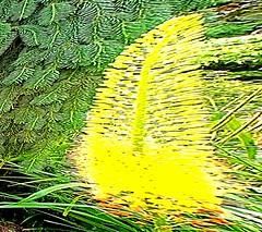 Fleur Peigne Explosion (alainalele) Tags: internet creative sigma commons bienvenue licence presse dp1 bloggeur zarbi paternit