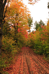 4 Wheelin' (3) (Rock Steady Images) Tags: autumn ontario canada fall leaves forest canon landscape eos 350d rebel xt 100views 200views simcoe 4wheelin explored sigma1770mmf2845dcmacro bypaulchambers rocksteadyimages