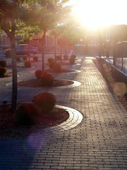 Providence, late afternoon (ConfessionalPoet) Tags: trees brick afternoon planters providence sidewalk rhodeisland late directionallight
