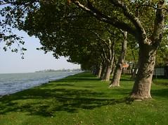 Balatonpart / The lake Balaton (.e.e.e.) Tags: plants lake landscape hungary olympus balaton blueribbonwinner passionphotography diamondclassphotographer flickrdiamond theperfectphotographer