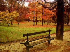 Autumn in the garden (inmacor) Tags: park autumn tree fall rain garden season landscape quality foret pars blueribbonwinner outstandingshots 25faves anawesomeshot superaplus aplusphoto ltytr2 ltytr1 favoritegarden superhearts