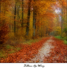 Follow the Way (Andrea&Mike@Flickr) Tags: autumn fall forest way herbst wald weg naturesfinest abigfave diamondclassphotographer flickrdiamond excellentphotographerawards platinumheartaward