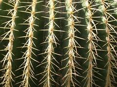 ortobotanico 092 (blum1) Tags: alberi fiori piante ortobotanico