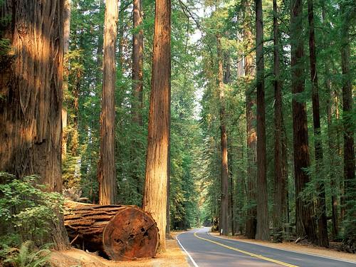 california ada parking sign height