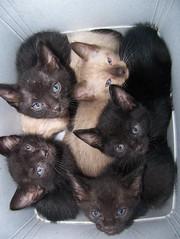 Hacinamiento gatuno (jmven) Tags: cats pets kodak gatos cachorros mascotas mininos z612
