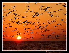 Bats at sunset (Grete Howard) Tags: sunset wow indonesia topf50 dream bec bats cubism themoulinrouge a outstandingshots golddragon beautifulcapture mywinners abigfave flickrgold theexhibit colorphotoaward aplusphoto ultimateshot 200750plusfaves sunsetpicnik infinestyle amazingamateur theunforgettablepictures extraordinarycompositions colourartaward betterthangood proudphotoshopper thegardenofzen definitelythebest amazingexcellence fdreamfrom
