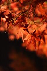清水寺01 (IrisC) Tags: autumn japan kyoto 京都 2007