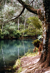 The Blue Lake at Jenolan Caves (traceyjohns) Tags: blue lake bush australia caves jenolan