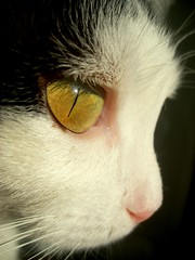 Beauty (sevgi_durmaz) Tags: cats cute animal animals cat funny sweet profile honey sweethearts lovely cuties likeness funnyanimals pamuk catprofile lovelycats fineartphotos golddragon kissablekat bestofcats platinumphoto impressedbeauty aplusphoto superbmasterpiece diamondclassphotographer flickrdiamond theunforgettablepictures photofaceoffwinner theperfectphotographer catmoments