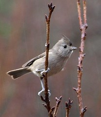 Bird in the Rain (jhhwild) Tags: bird rain topic