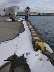 とある漁港にて