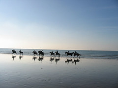Havre, plage + chevaux, 12-01 (palamède) Tags: sea horses horse mer france silhouette cheval silhouettes sable horsemen ombre reflet cavalier plage reflets contrejour ombrechinoise chevaux ombres cavaliere horseman cavaliers lehavre