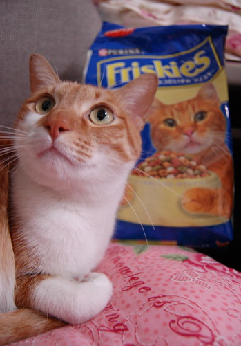 Love Friskies