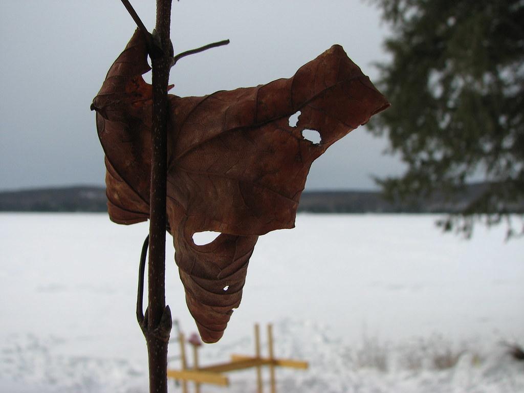 The masked leaf