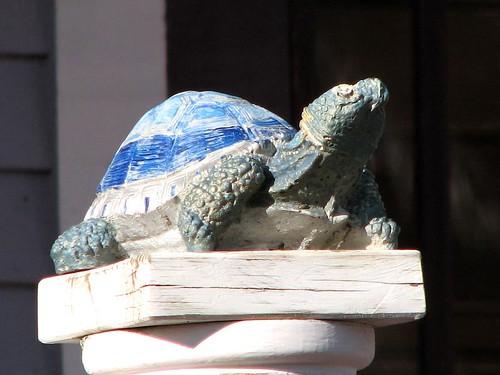 031608 - Turtle 1