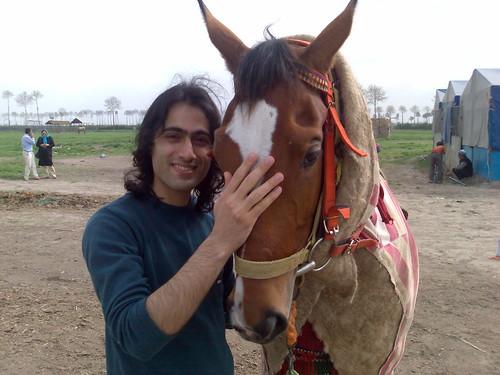 Torkaman Horse