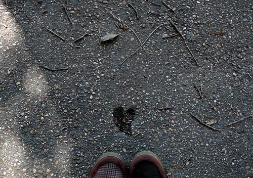 corazón en el asfalto, amor por los suelos