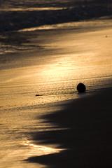 coco (Rockford Wolf) Tags: costa beach america shadows central playa rica samara