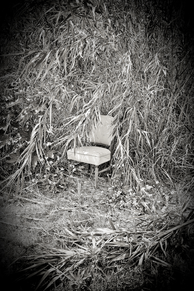 Fancy Formal Chair in the Jungle