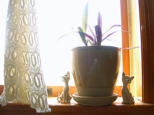 miu & miao