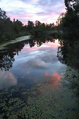 walking the dog 1 (dalinean) Tags: sunset water river landscape collie scenic sigma australia wa sd10 westaustralia diamondclassphotographer flickrdiamond